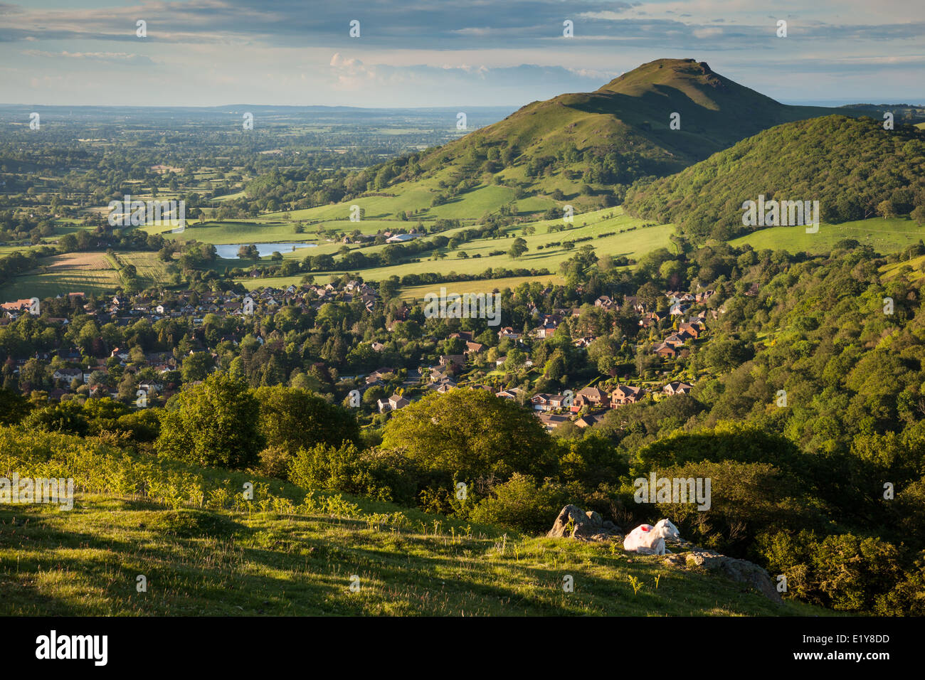 Caer Caradoc and Helmeth Hill in the evening sunshine, as seen from Ragleth Hill. Church Stretton, Shropshire - Stock Image