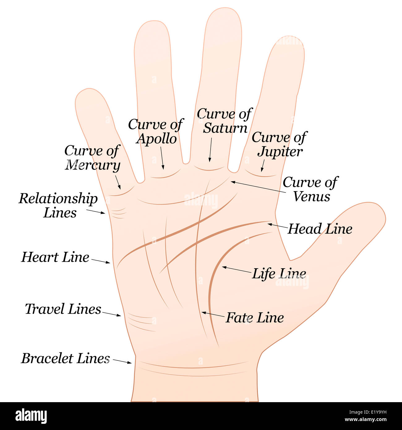 palmistry right hand with lines and their names white background