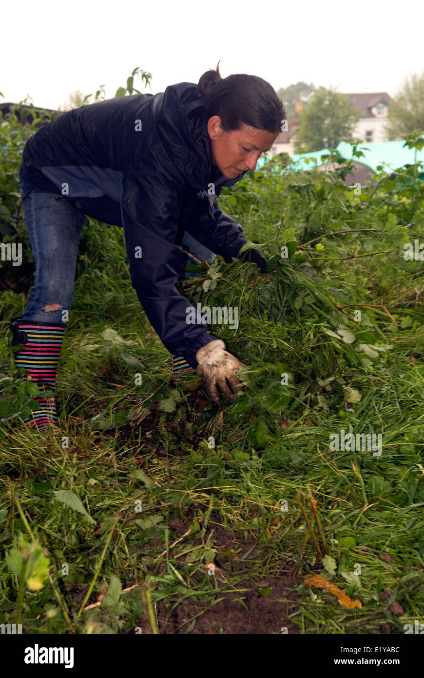 Woman doing voluntary work clearing foliage to make way for new scout hut, Liss, Hampshire, UK. - Stock Image