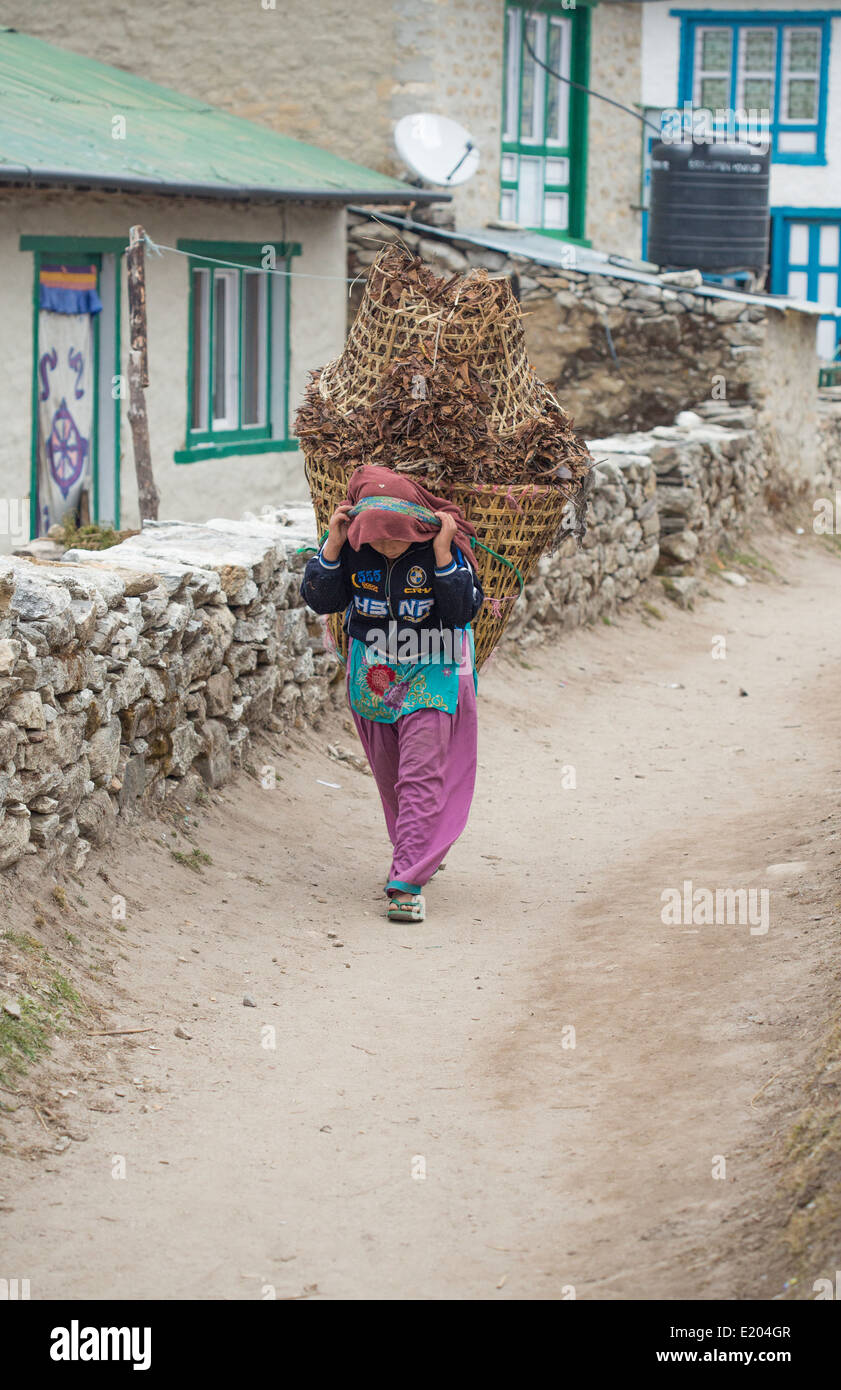 Nepal Female portwe carry load in fields divided by stone walls in the village of Khumjung, remote, Mt everest, - Stock Image