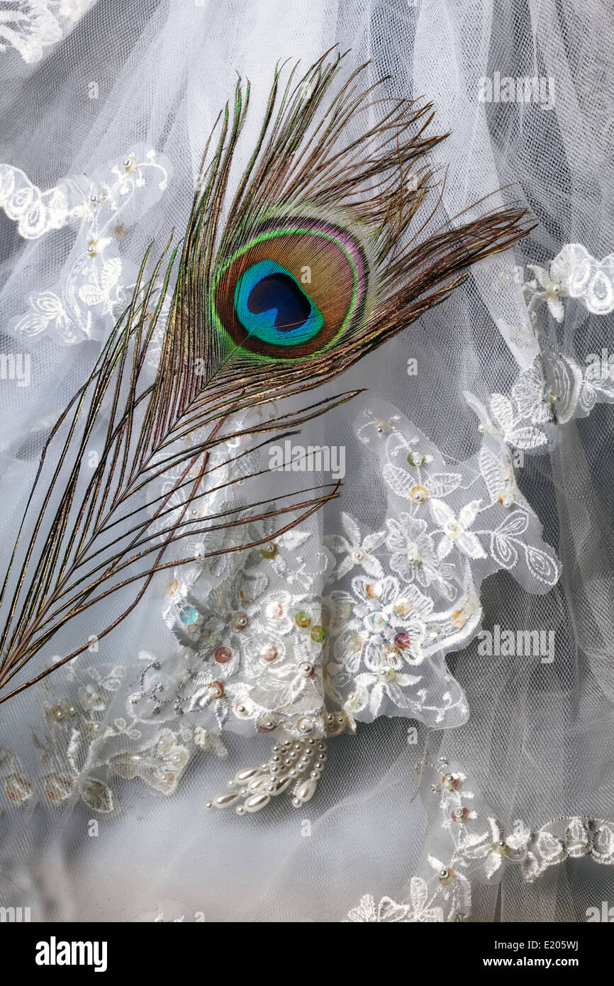 a peacock feather on a bridal veil - Stock Image
