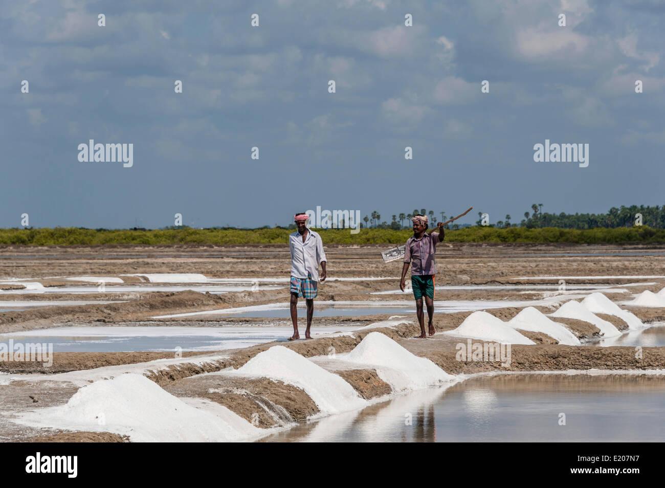 Saline workers, salt production, saltworks, near Thazhankadu, Tamil Nadu, India - Stock Image