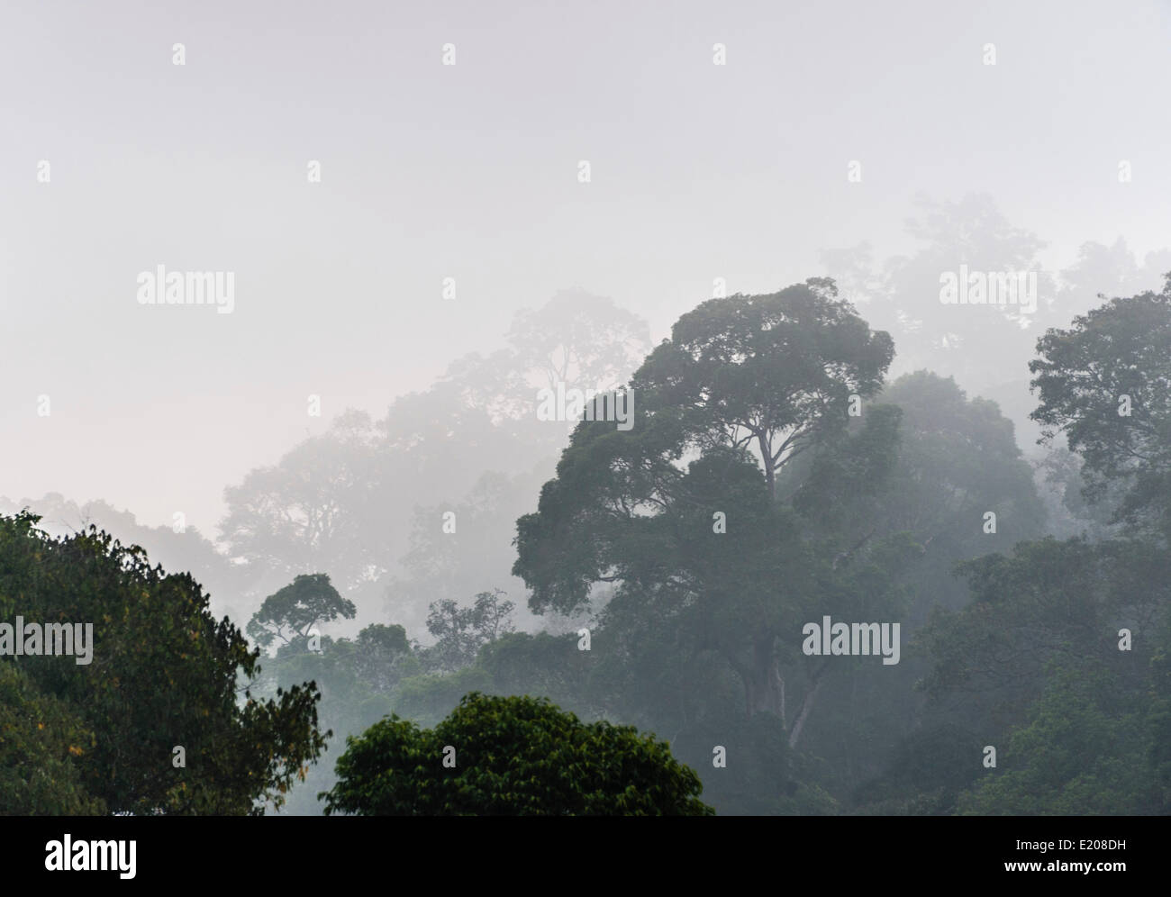 Jungle in the mist, silhouettes of trees, Thekkadi, Periyar Dam, Tamil Nadu, India - Stock Image