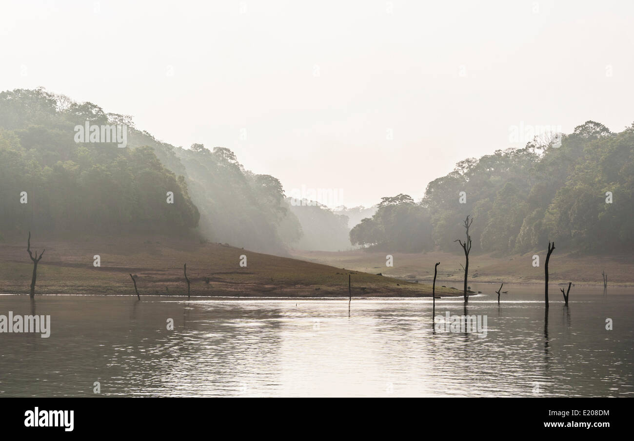 Periyar dam and jungle in the mist, Thekkadi, Tamil Nadu, India - Stock Image