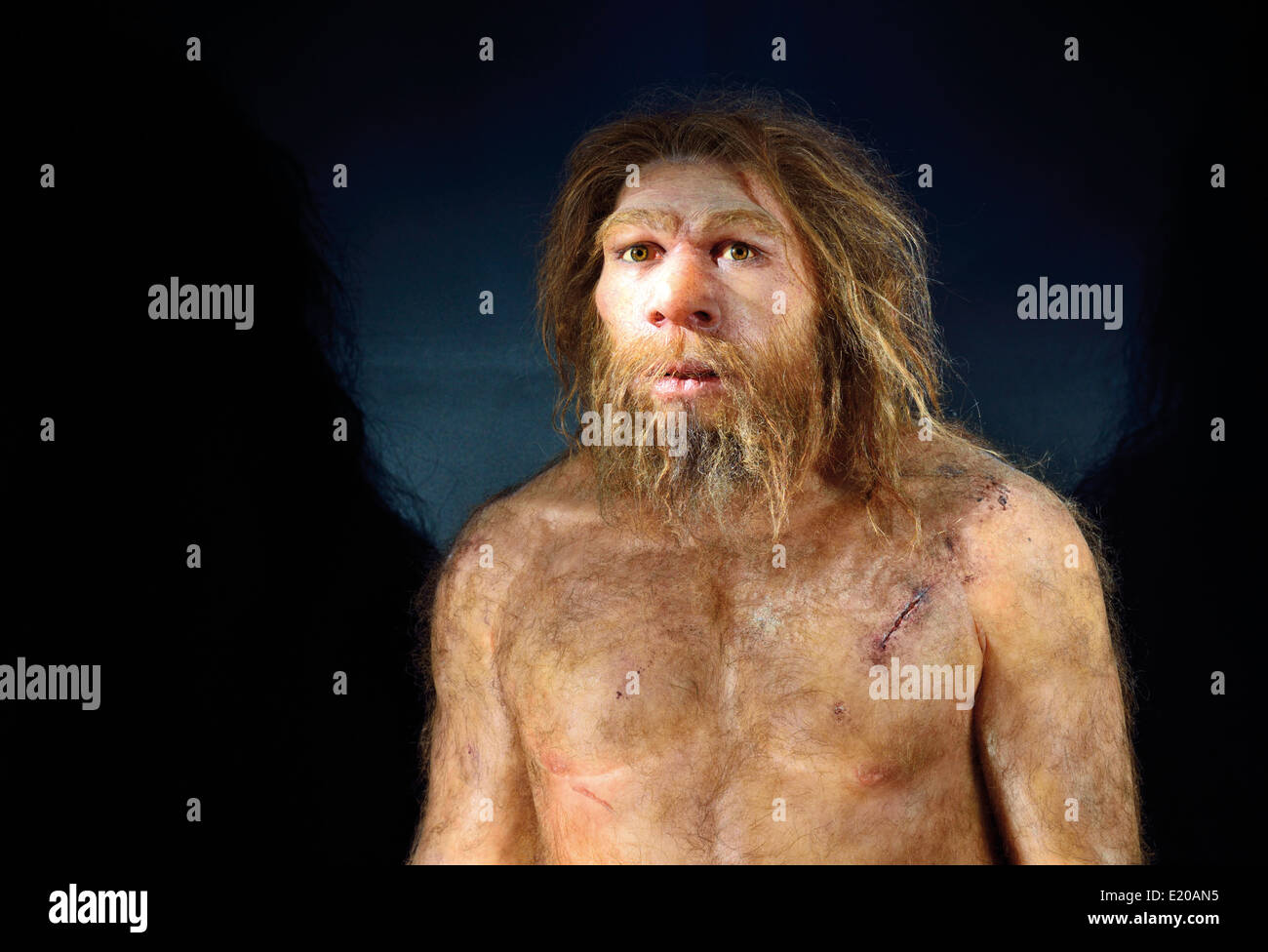 Spain, Burgos: Homo neanderthalensis in the Museum of Human Evolution - Stock Image