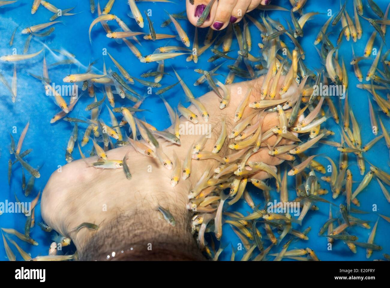 Foot therapy fish spa - Stock Image
