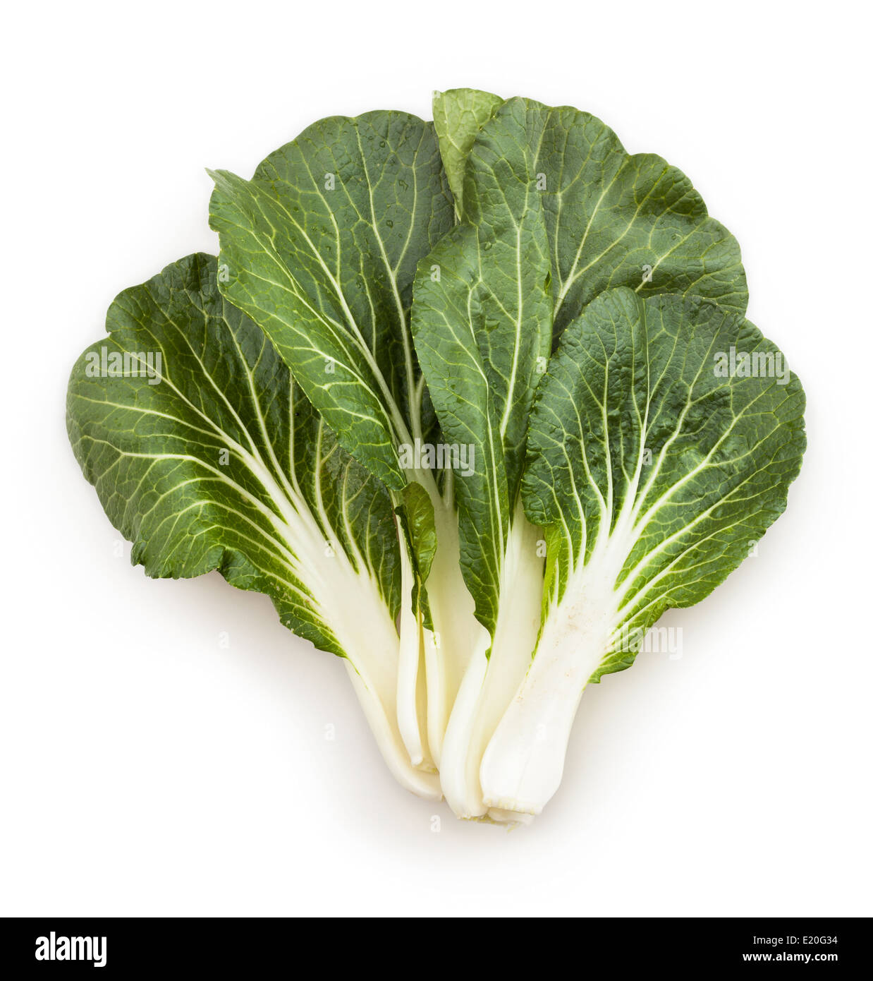 bok choy chinese cabbage leaves isolated - Stock Image