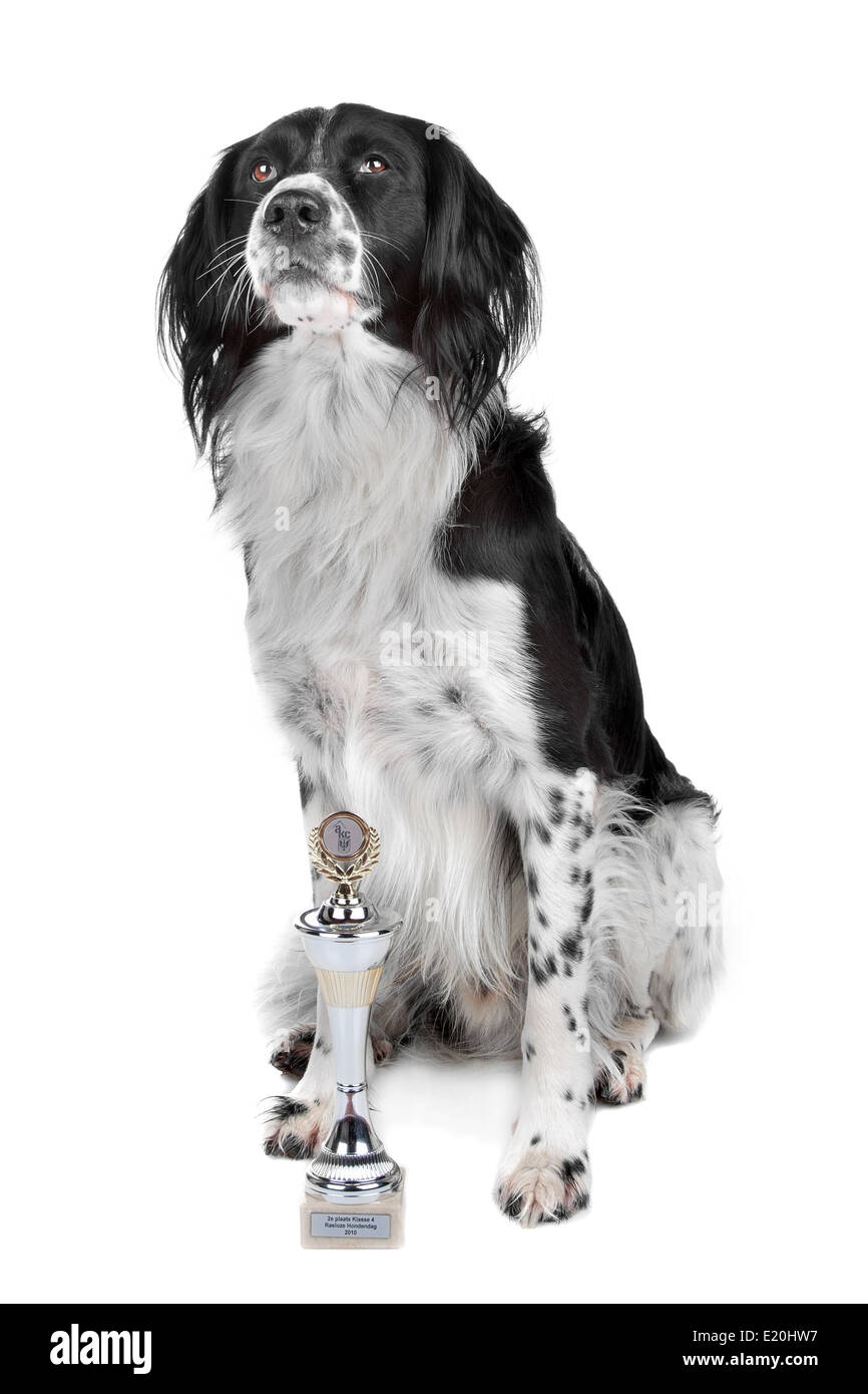 Mixed breed dog - Stock Image