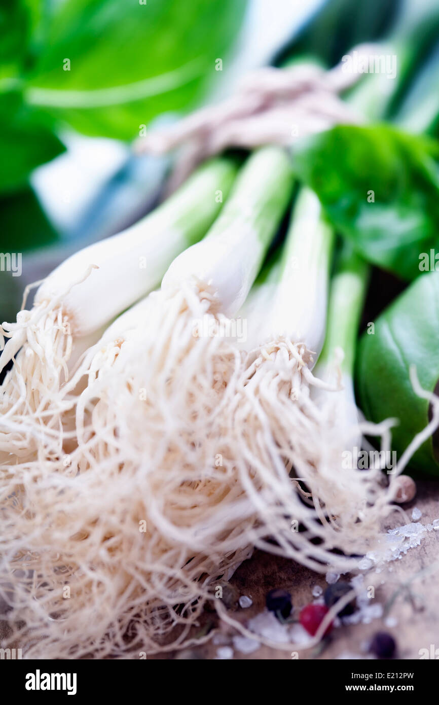 Green Onion close up shoot - Stock Image