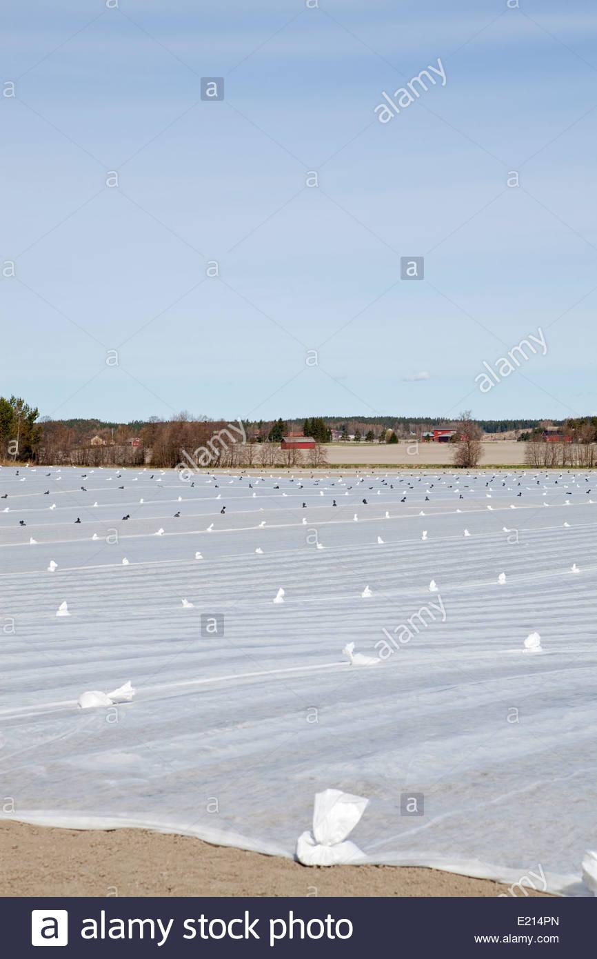 Farming in spring - Stock Image