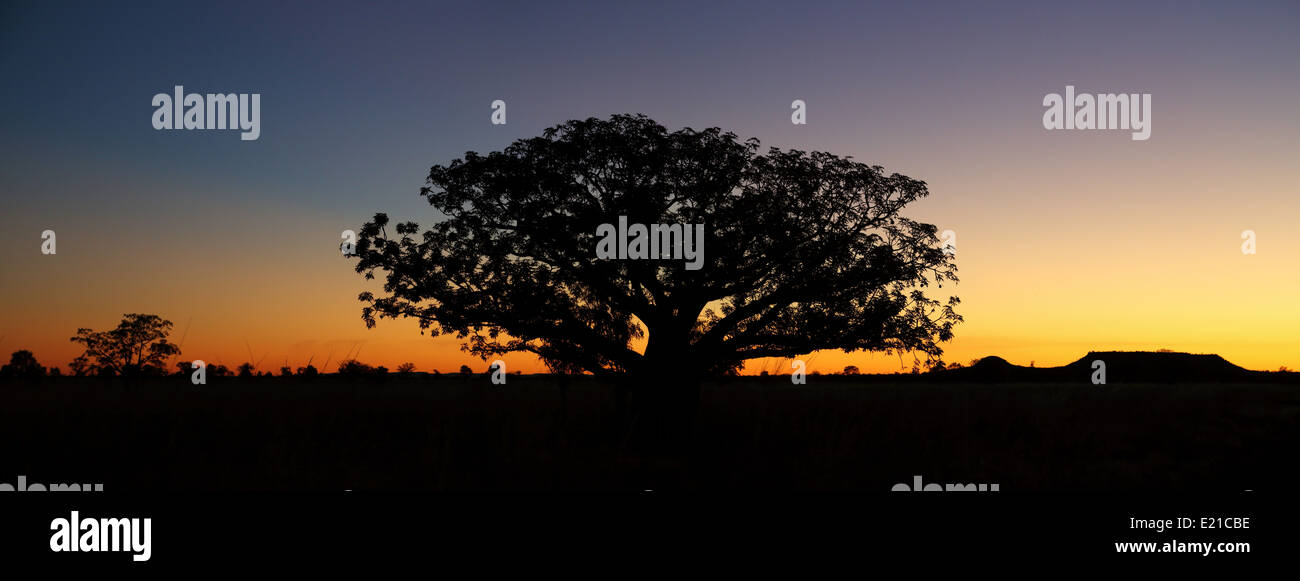 A stunningly simple sunset silhouettes a boab tree in the Kimberly region of Western Australia. - Stock Image