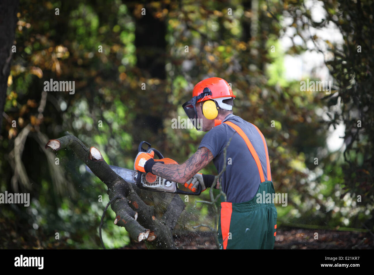 Forest workers or lumberjacks sawing Stock Photo