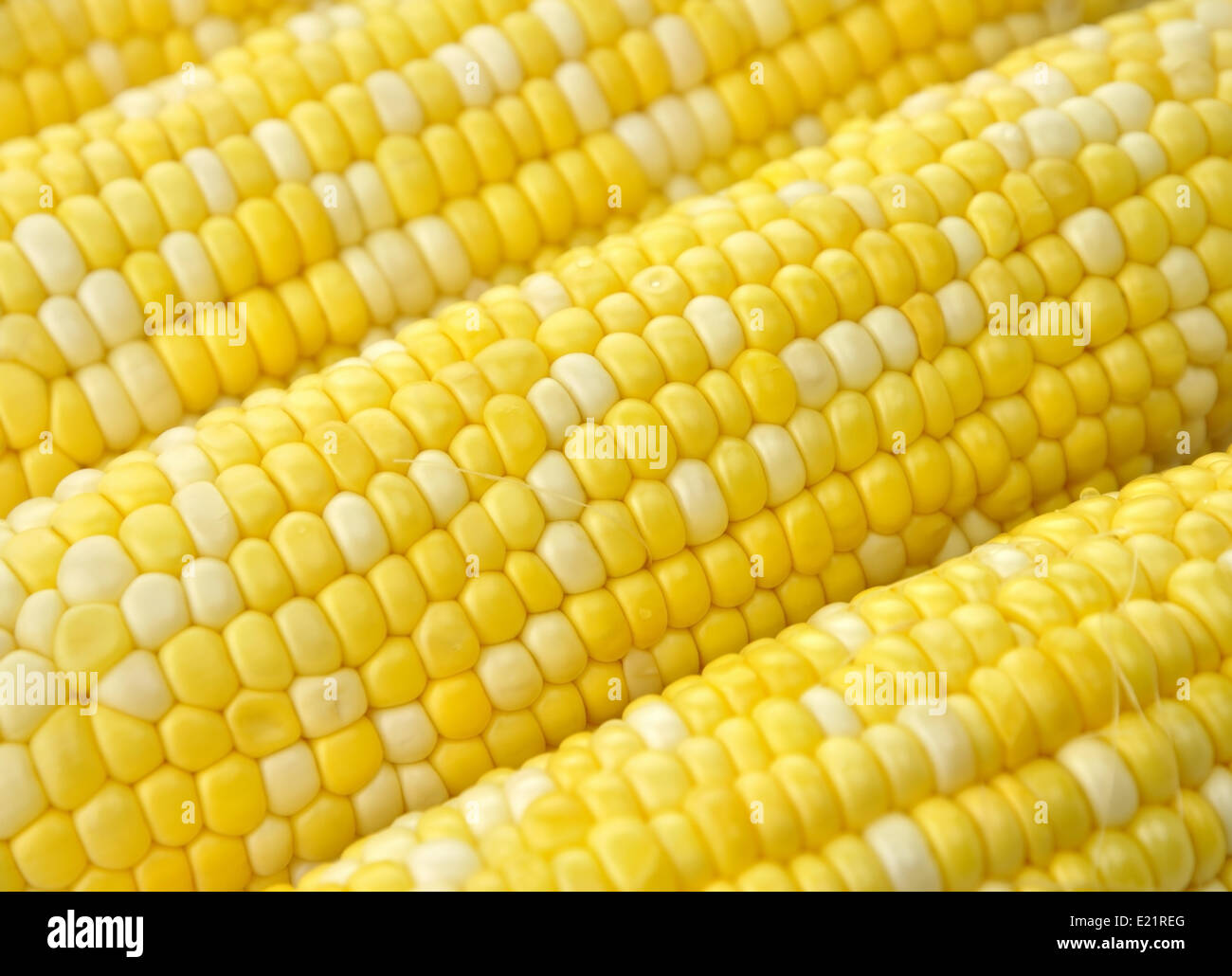 Ears of corn - Stock Image