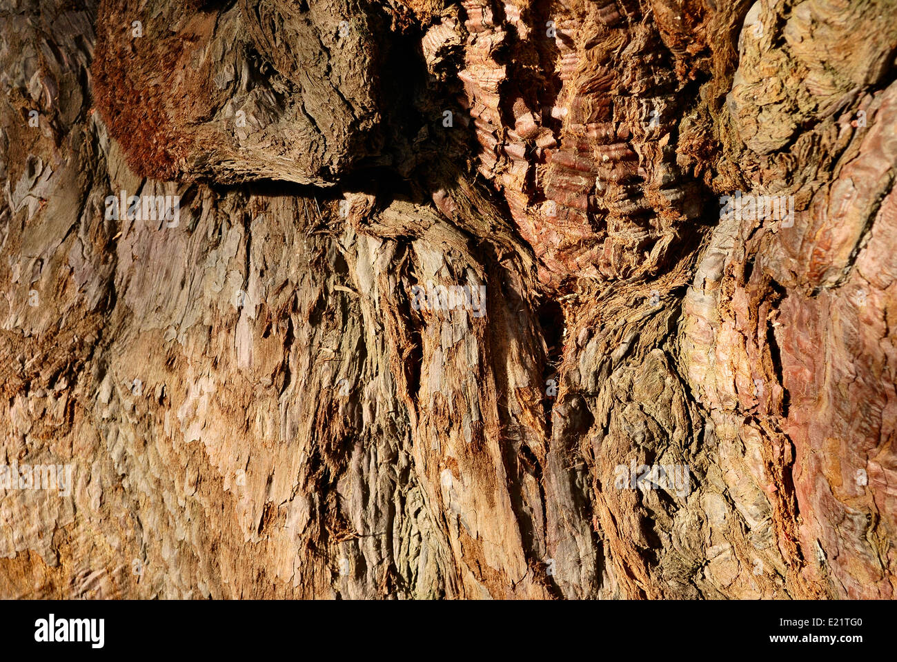nature tree bark surface texture - Stock Image