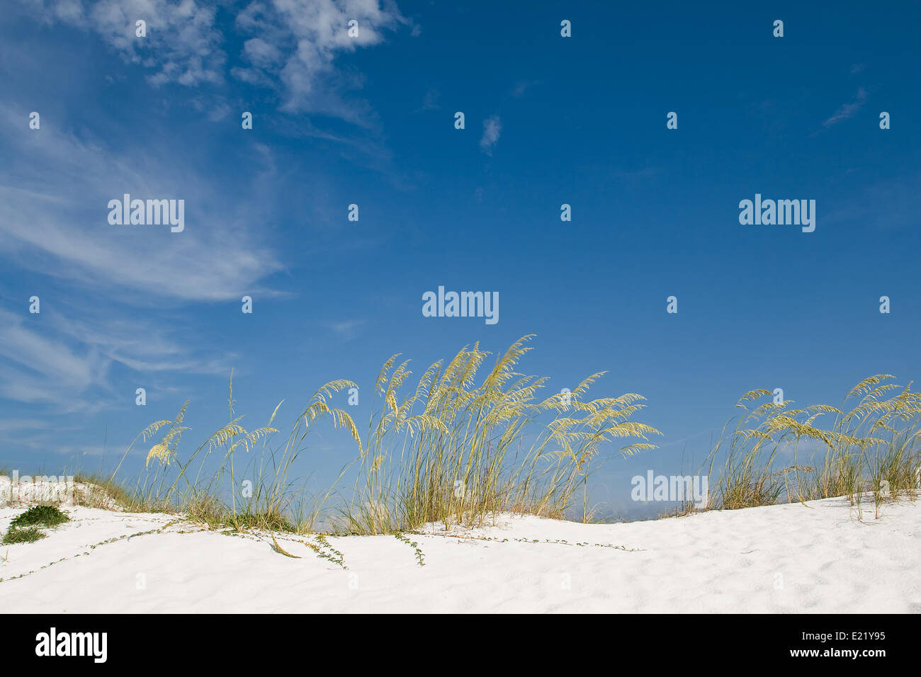 Beach sand dune with grasses and cane - Stock Image