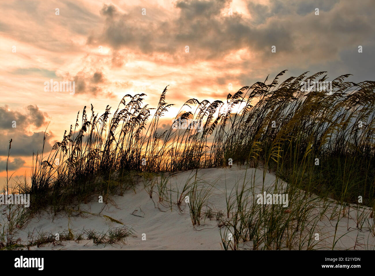Sand dune and grasses - Stock Image