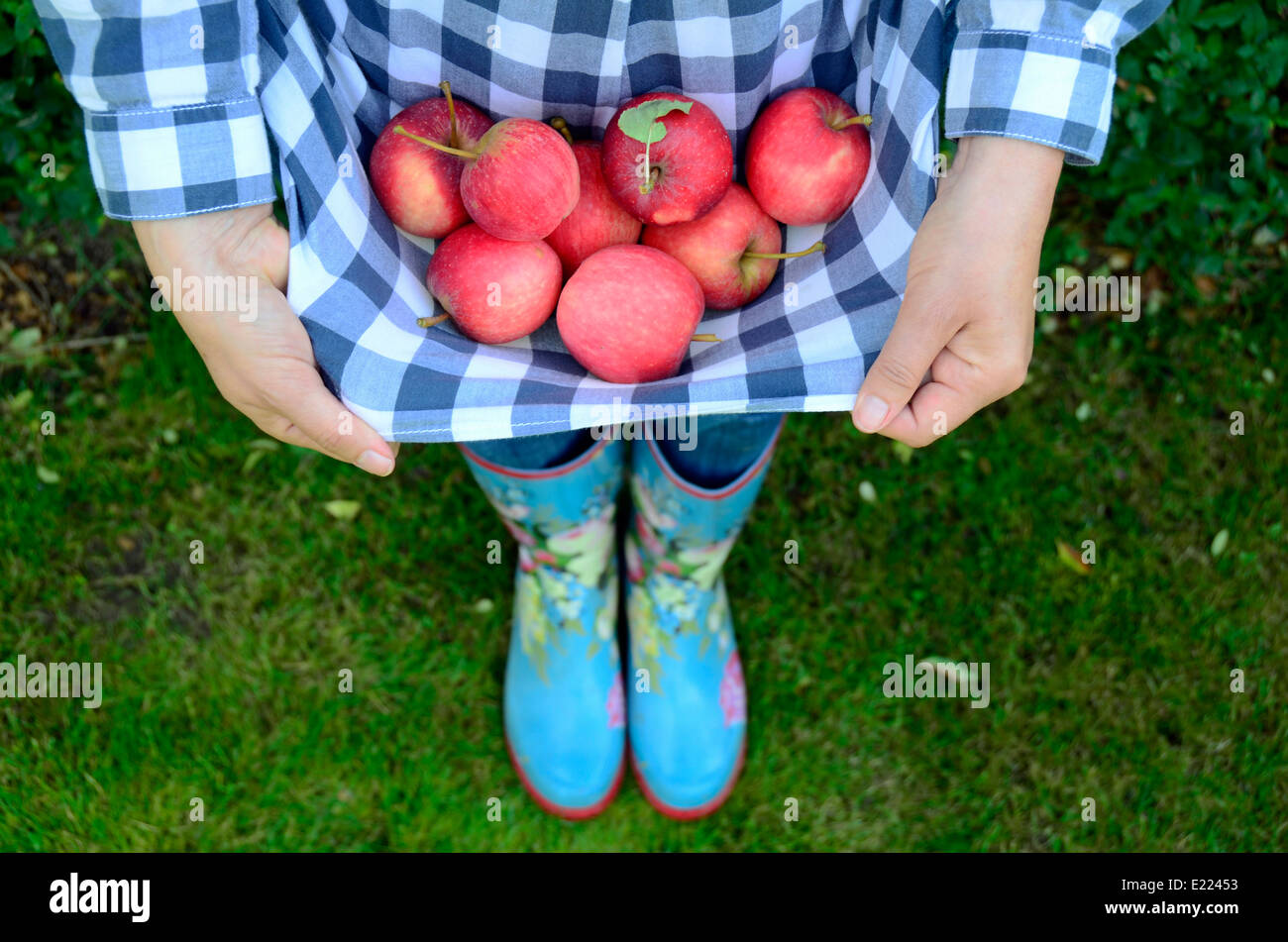 woman carrying red apples in apron Brandenburg Germany - Stock Image