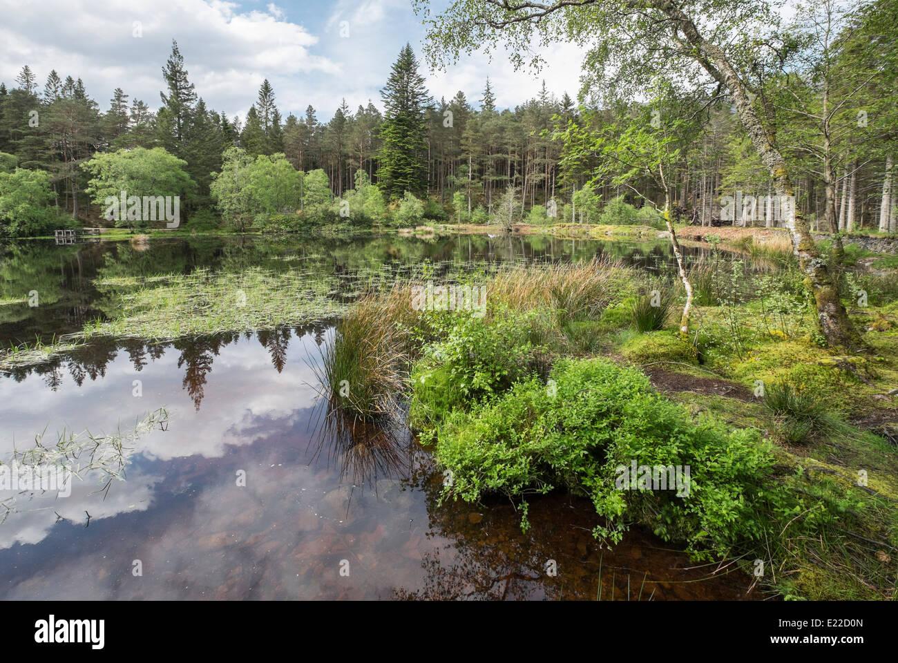 Glencoe Lochan freshwater loch in Forestry Commission woodland. Glencoe, Highland, Scotland, UK, Britain - Stock Image