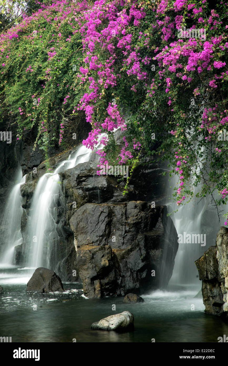 Waterfalls with boganvilla flowers. Maui, Hawaii - Stock Image