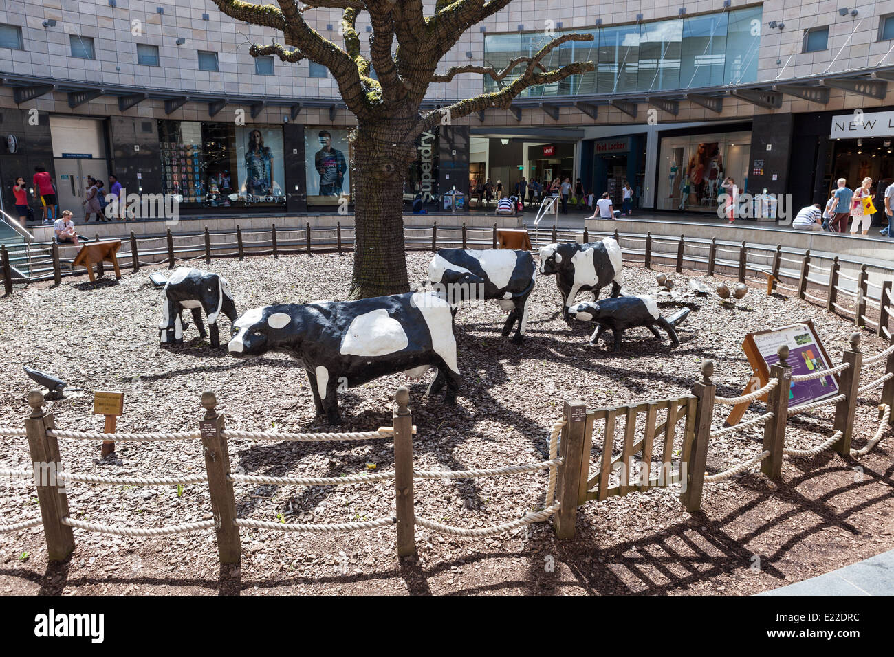 Milton Keynes' Concrete Cows have become infamous since being sculpted by Canadian-born artist Liz Leyh in 1978. - Stock Image