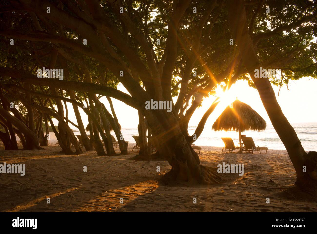 Sunburst through trees with beach chairs and umbrellas on beach. Punta Mita, Mexico - Stock Image