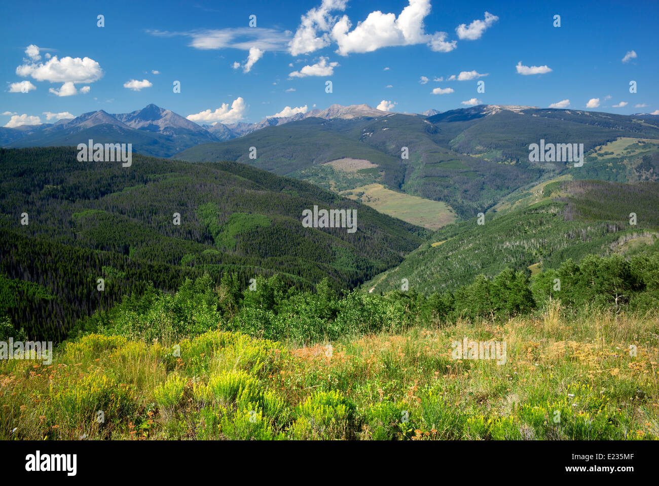 The Sawatch Range with rabbitbrush and clouds. Near Vail Colorado - Stock Image