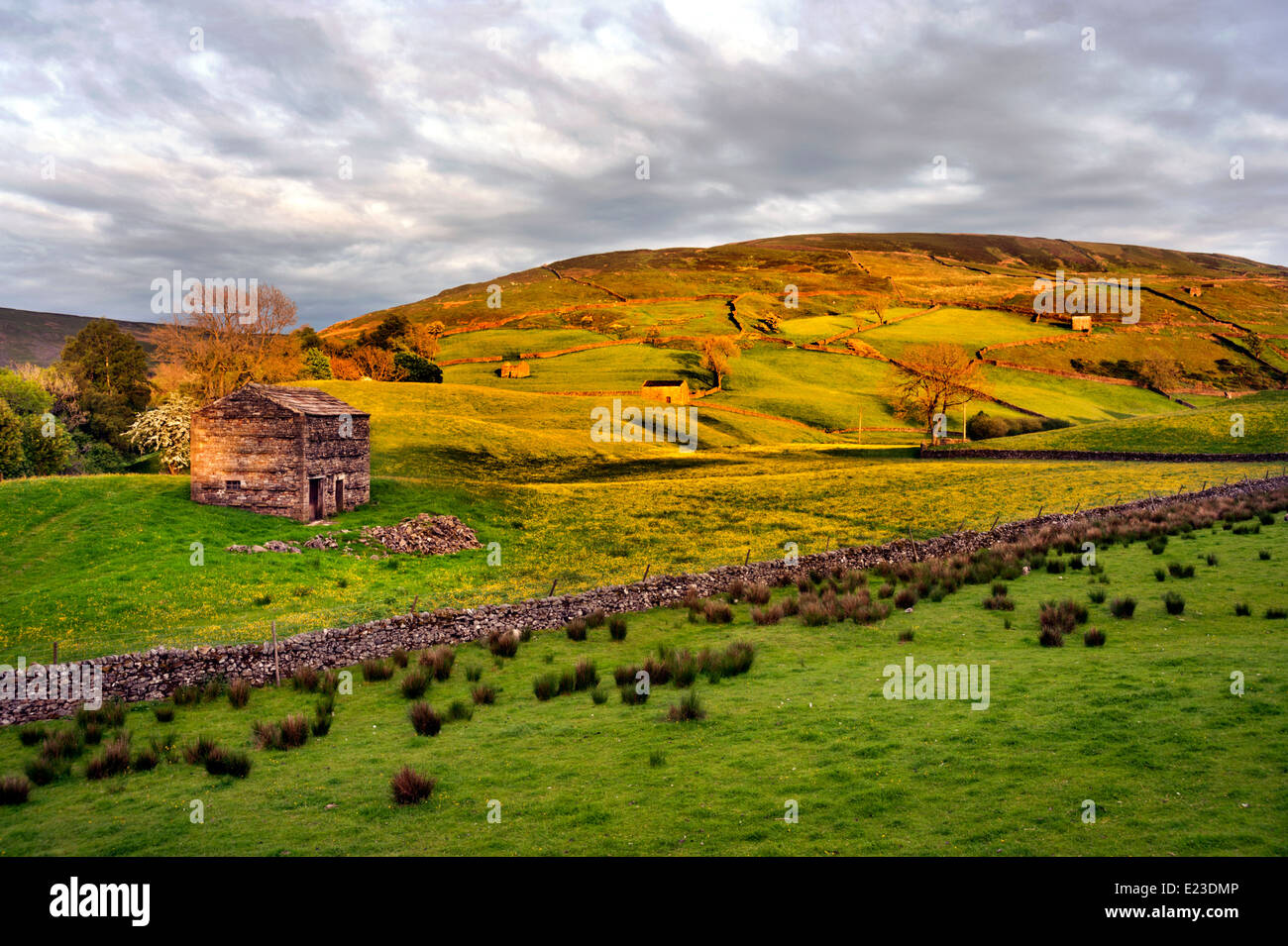 Traditional barn in The Yorkshire Dales hamlet of Keld, at the junction of the Pennine Way and Coast to Coast trails, - Stock Image