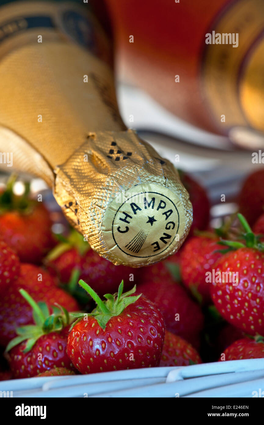 Close view on luxury Champagne bottles in wine chiller cabinet with punnets of fresh strawberries - Stock Image