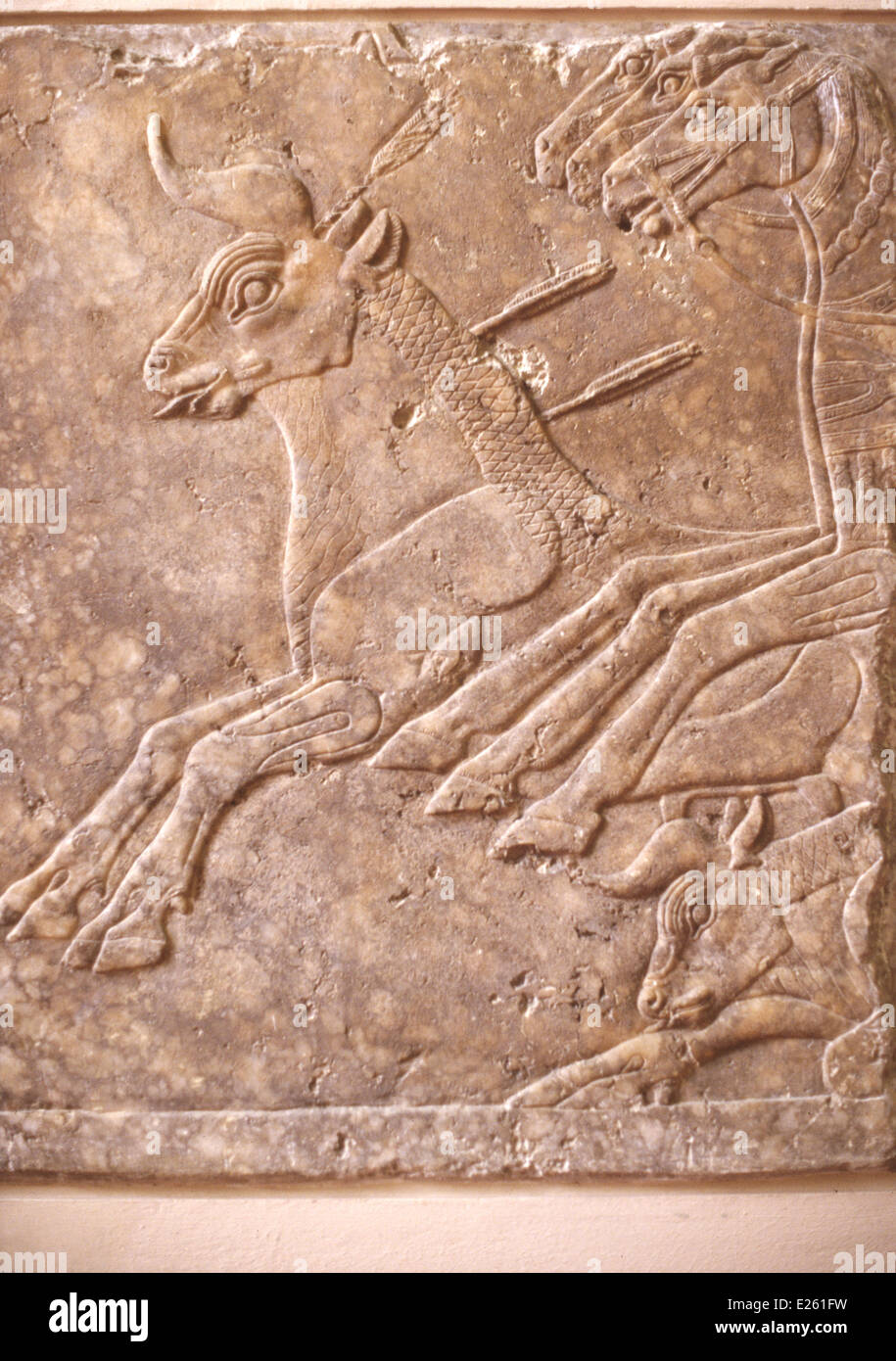berlino,pergamon museum,assyrian art,scene of hunting,9th c. b.c. - Stock Image