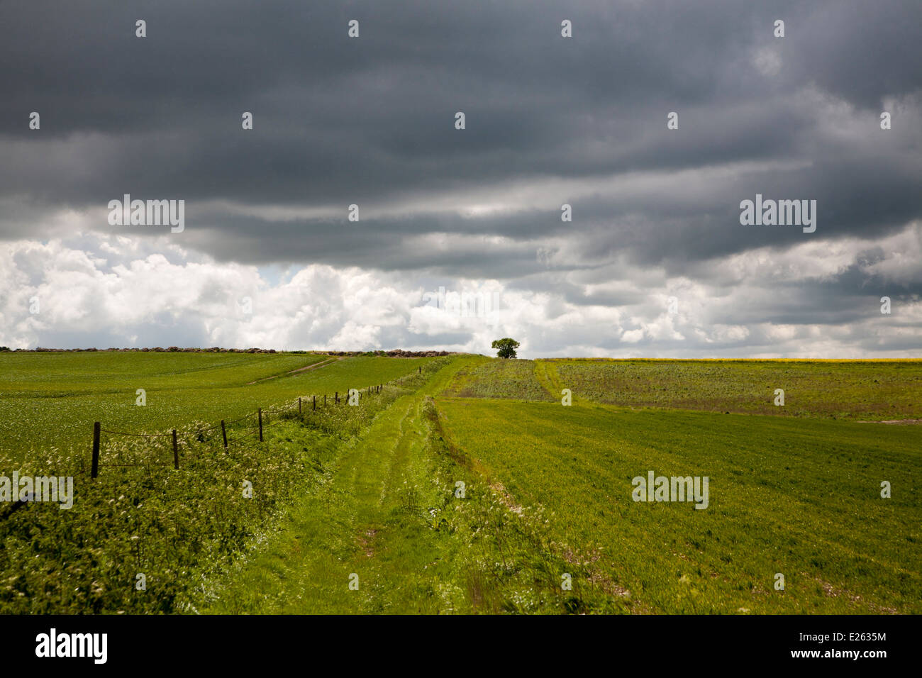 Chalk downland landscape upland scenery All Cannings Down, near East Kennet, Wiltshire, England dramatic dark clouds - Stock Image