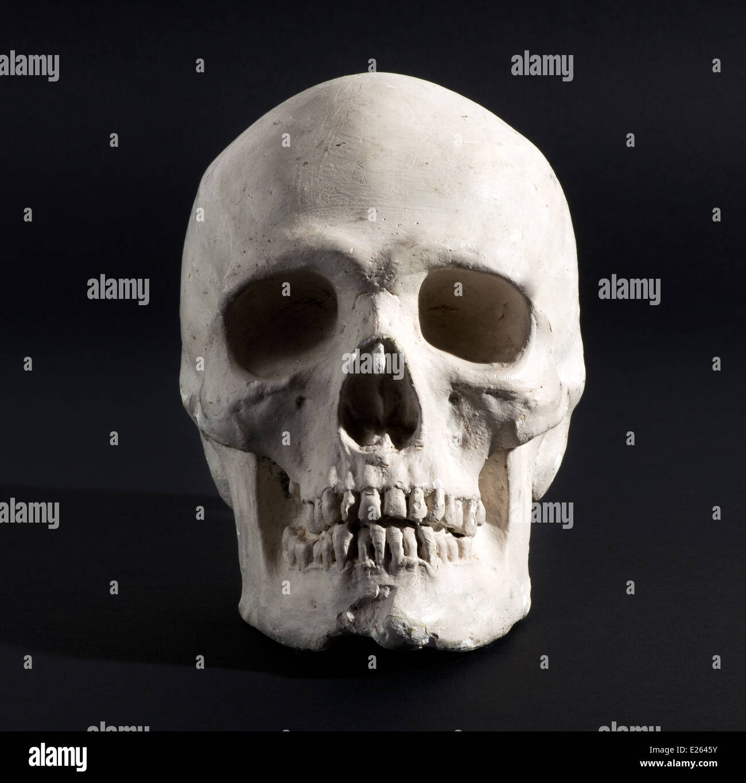 Model of a human skull Stock Photo