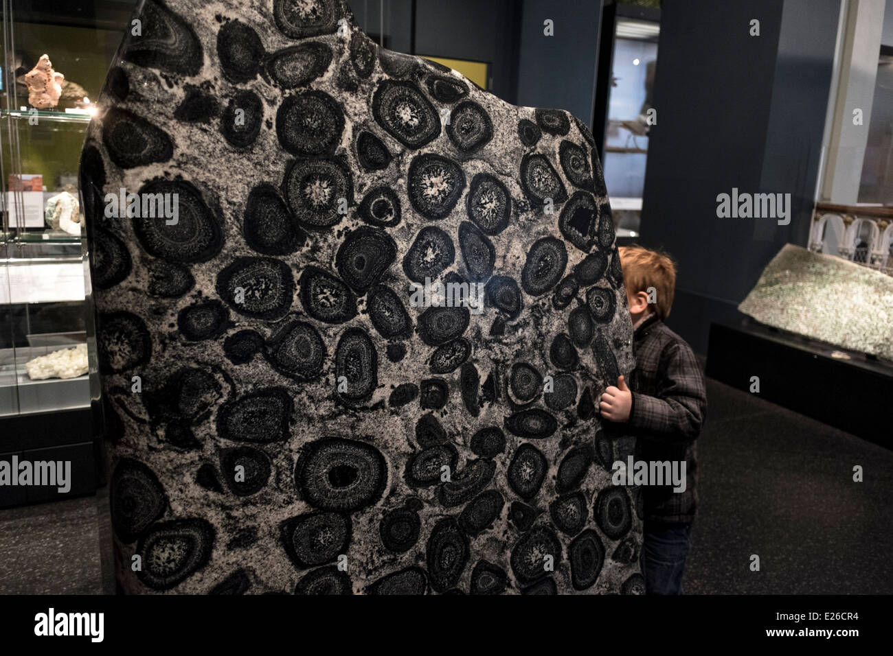 National Museum of Scotland, Edinburgh, Scotland - Stock Image