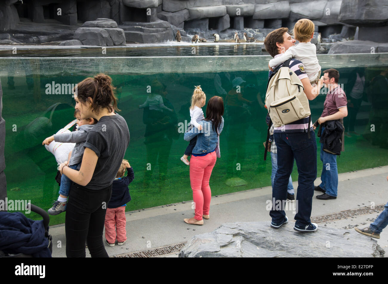 Visitors looking at penguins through the glass, Paris Zoo France - Stock Image