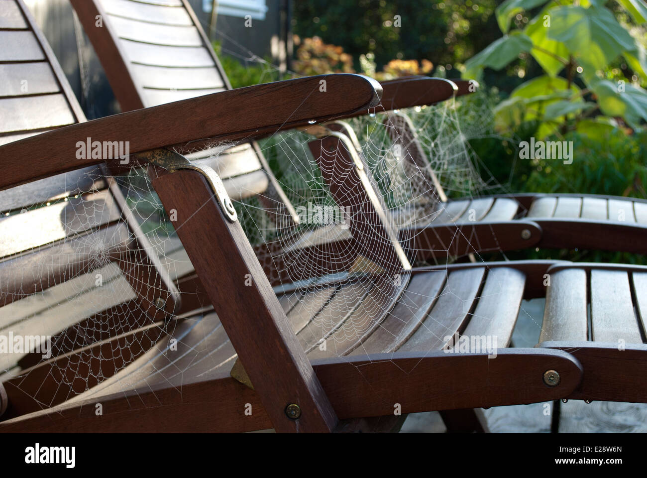 Row of Spiders Webs on Garden Loungers - Stock Image