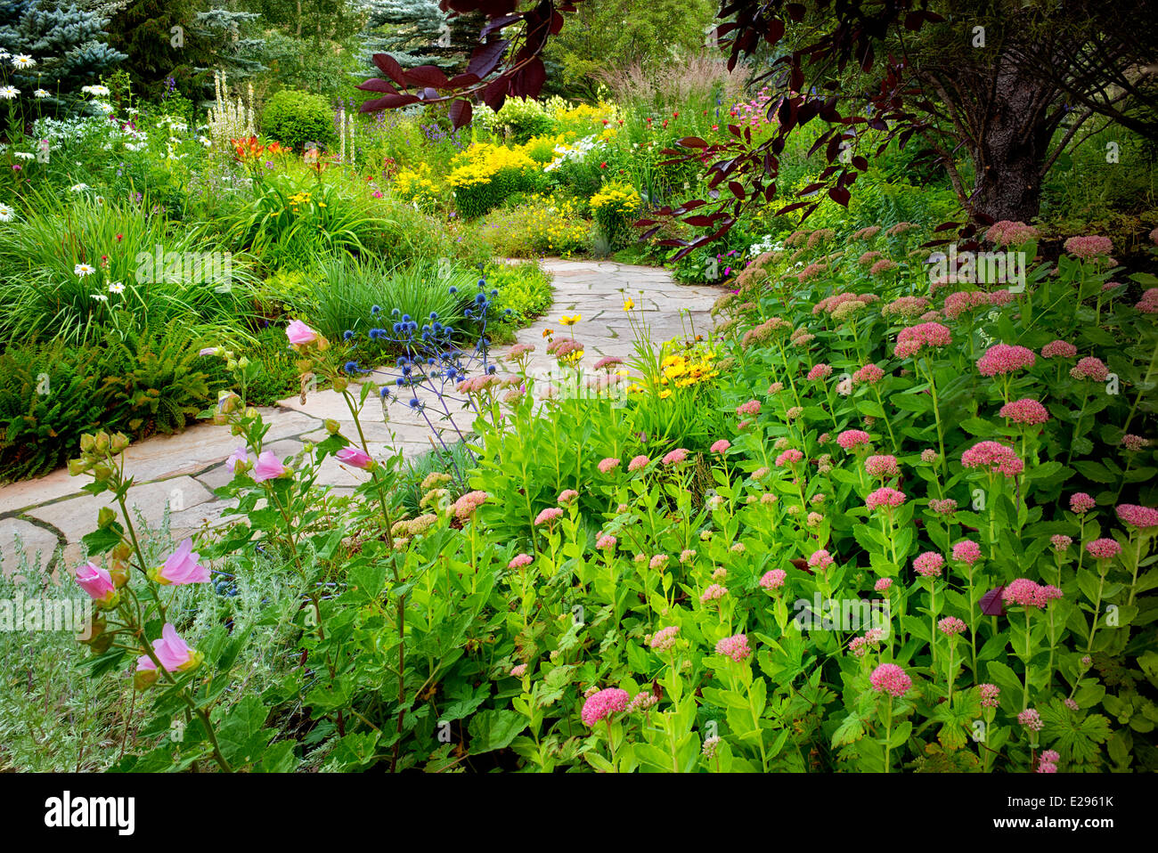 Flower garden with foreground sedums and stone path in Betty Ford Alpine Gardens. Vale Colorado - Stock Image