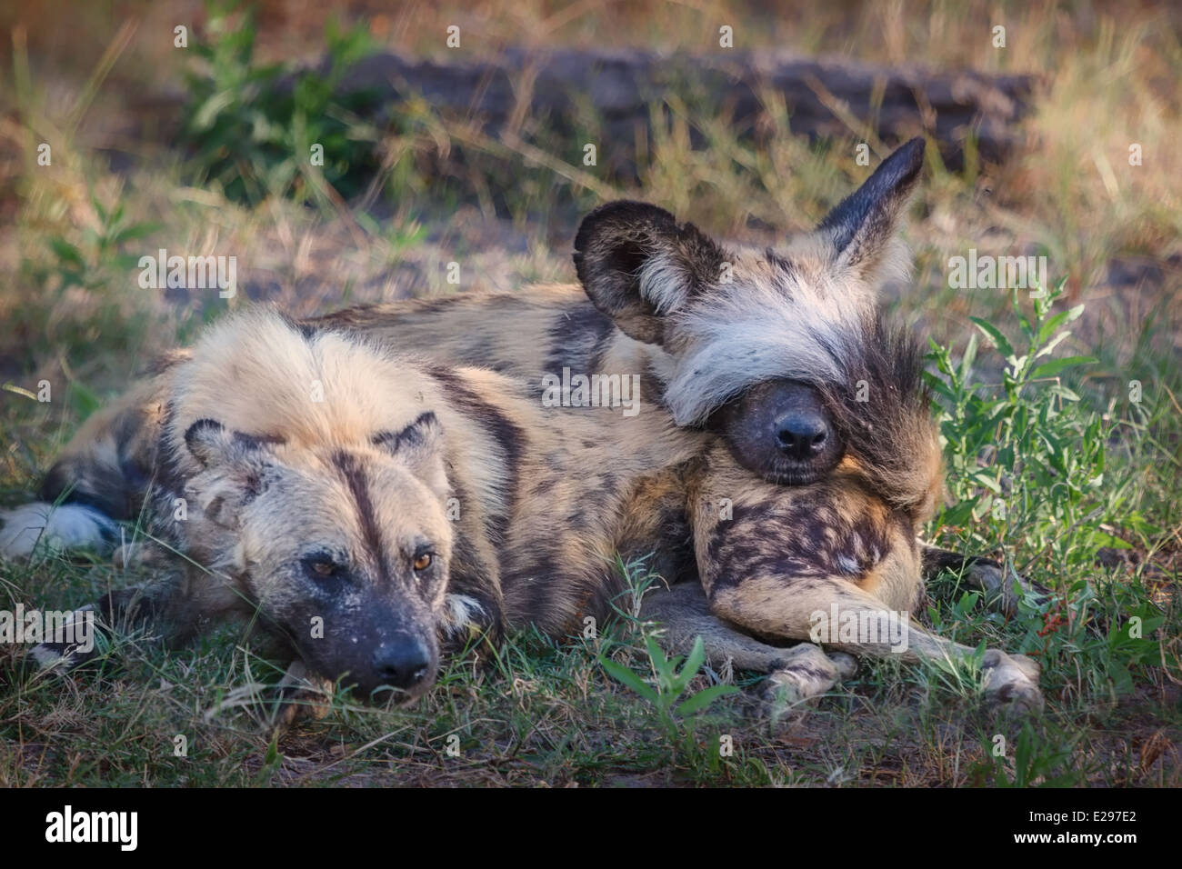Wags Stock Photos Amp Wags Stock Images Alamy