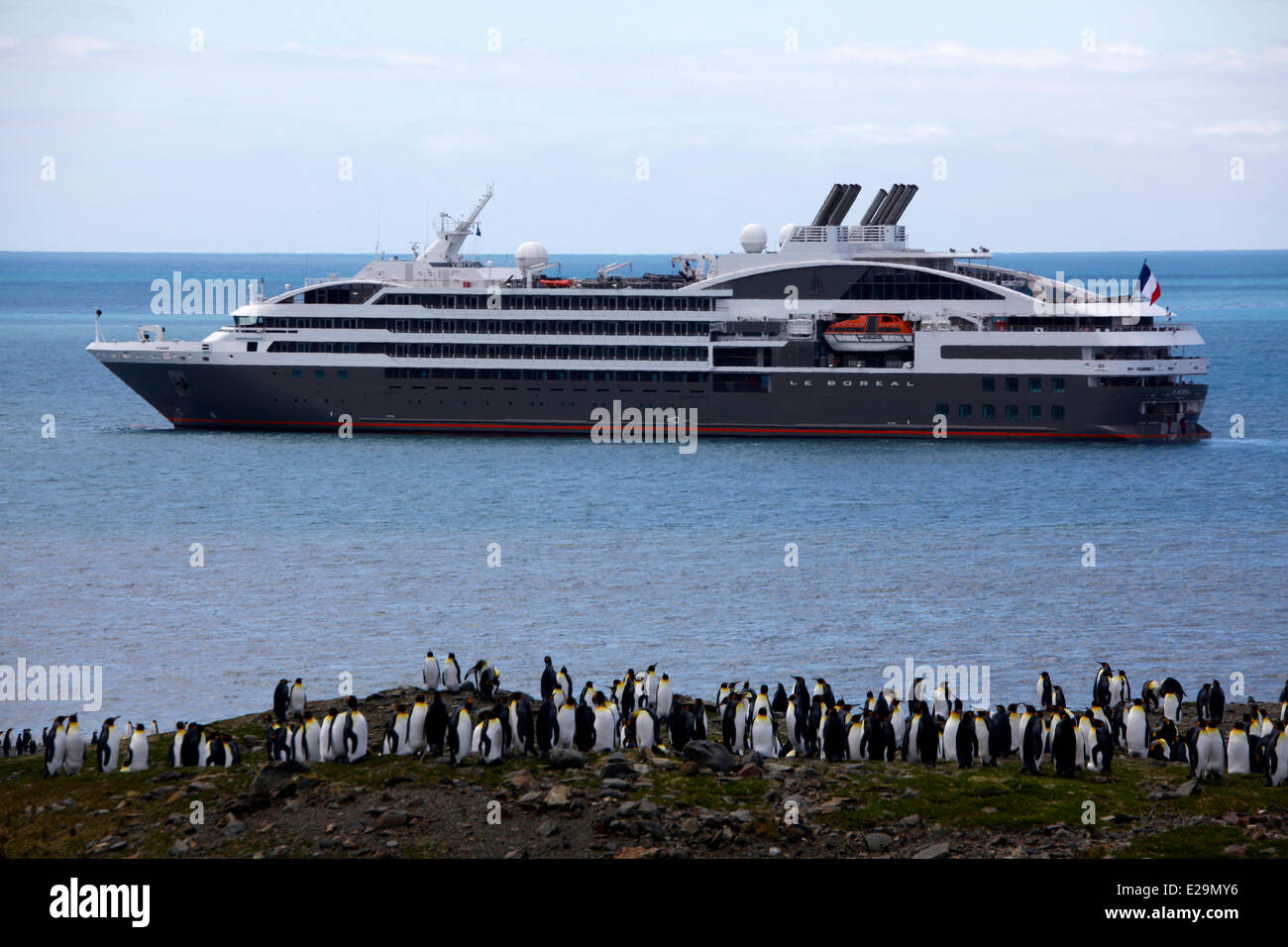 Antarctica, cruise on Boreal ship, South Georgia Island, Saint Andrews Bay, colony of more than 400 000 king penguins, - Stock Image