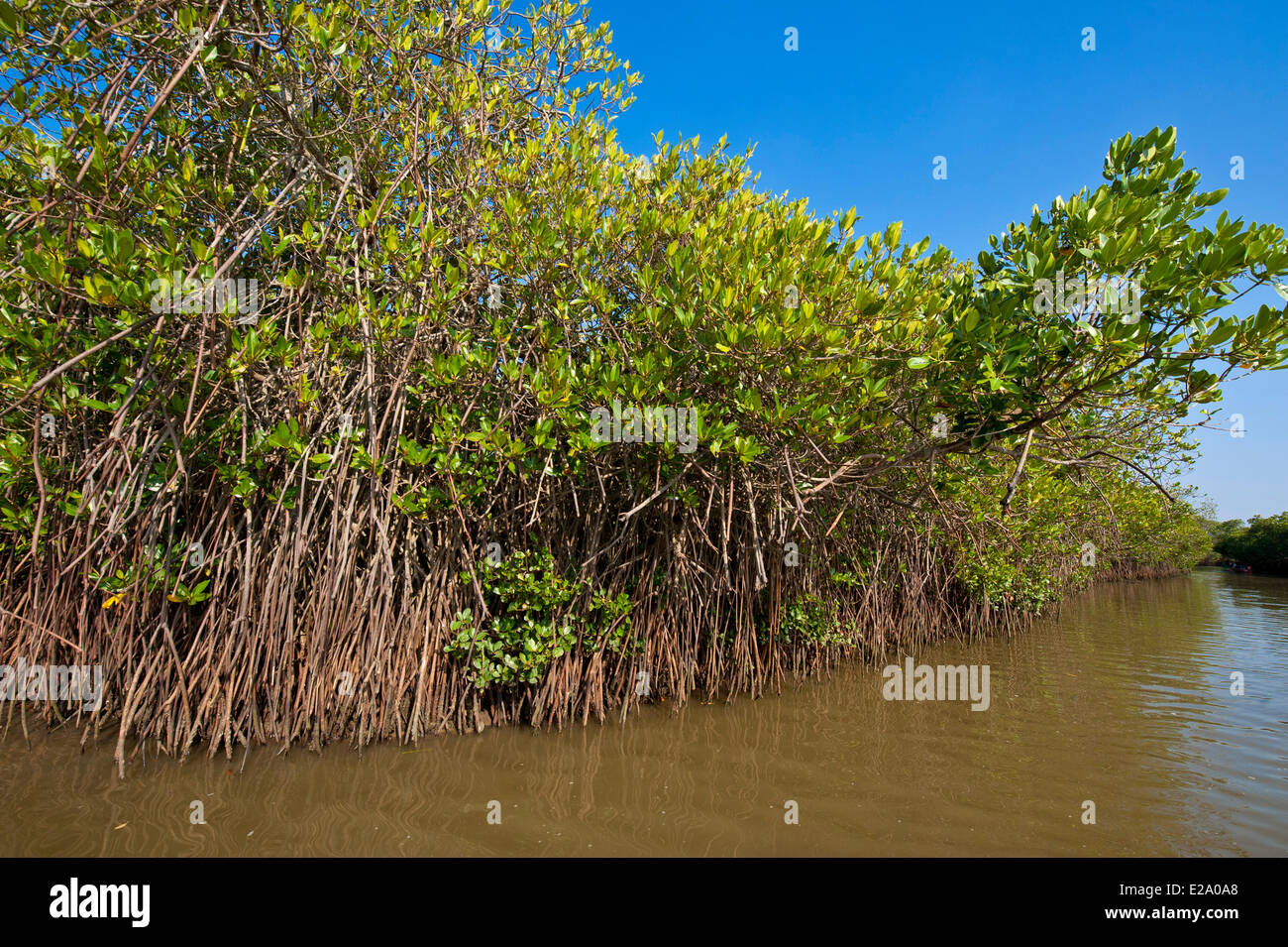 managing and protecting the mangrove forestry Around the world to conserve, rehabilitate and manage mangroves sustainably,  but the  protection agency, accra) and mr edward obiaw (ghana forestry.