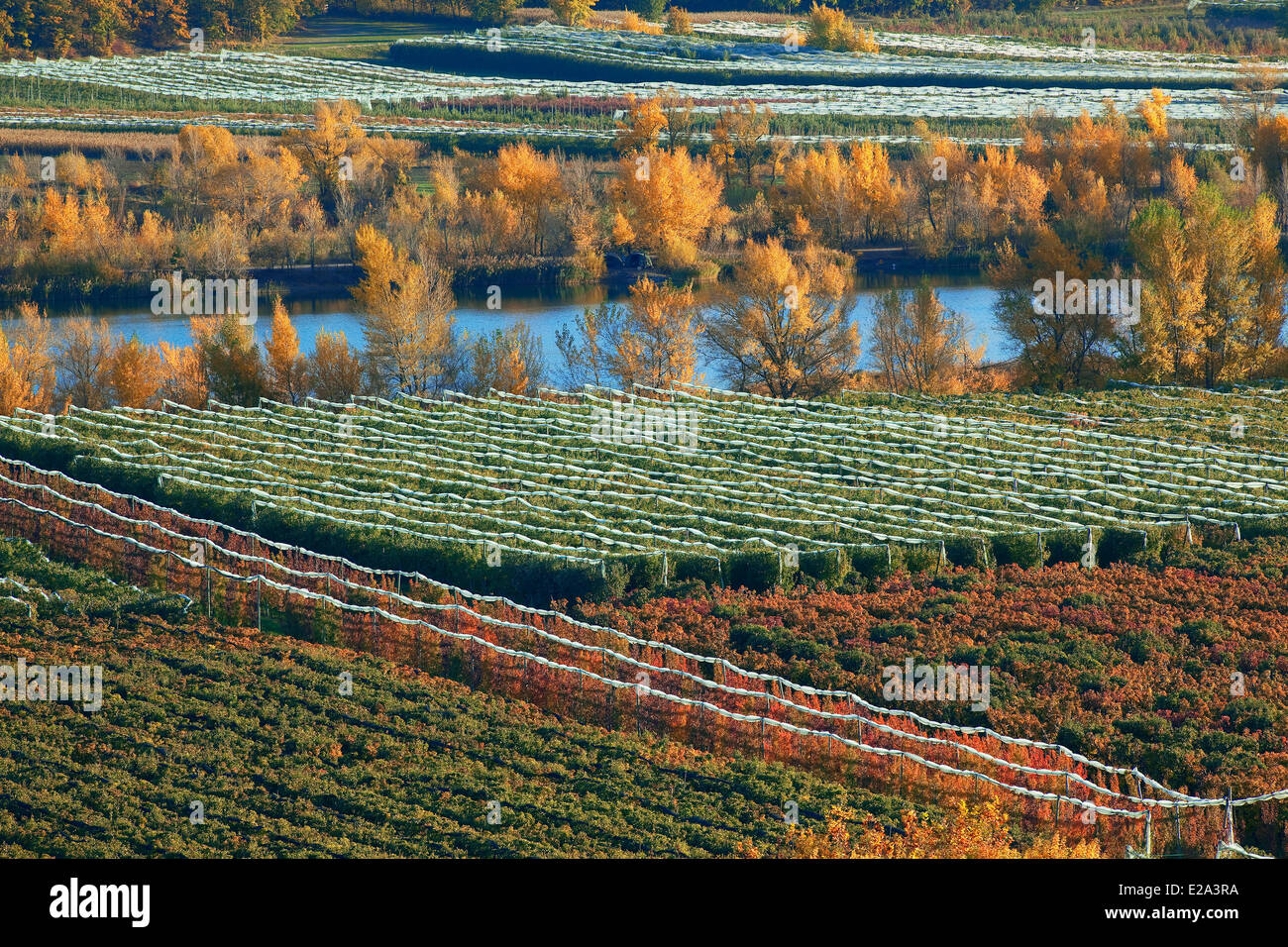 France, Hautes Alpes, Plan Vitrolles, fruit trees and the Durance, Alpes de Haute Provence, in the background - Stock Image
