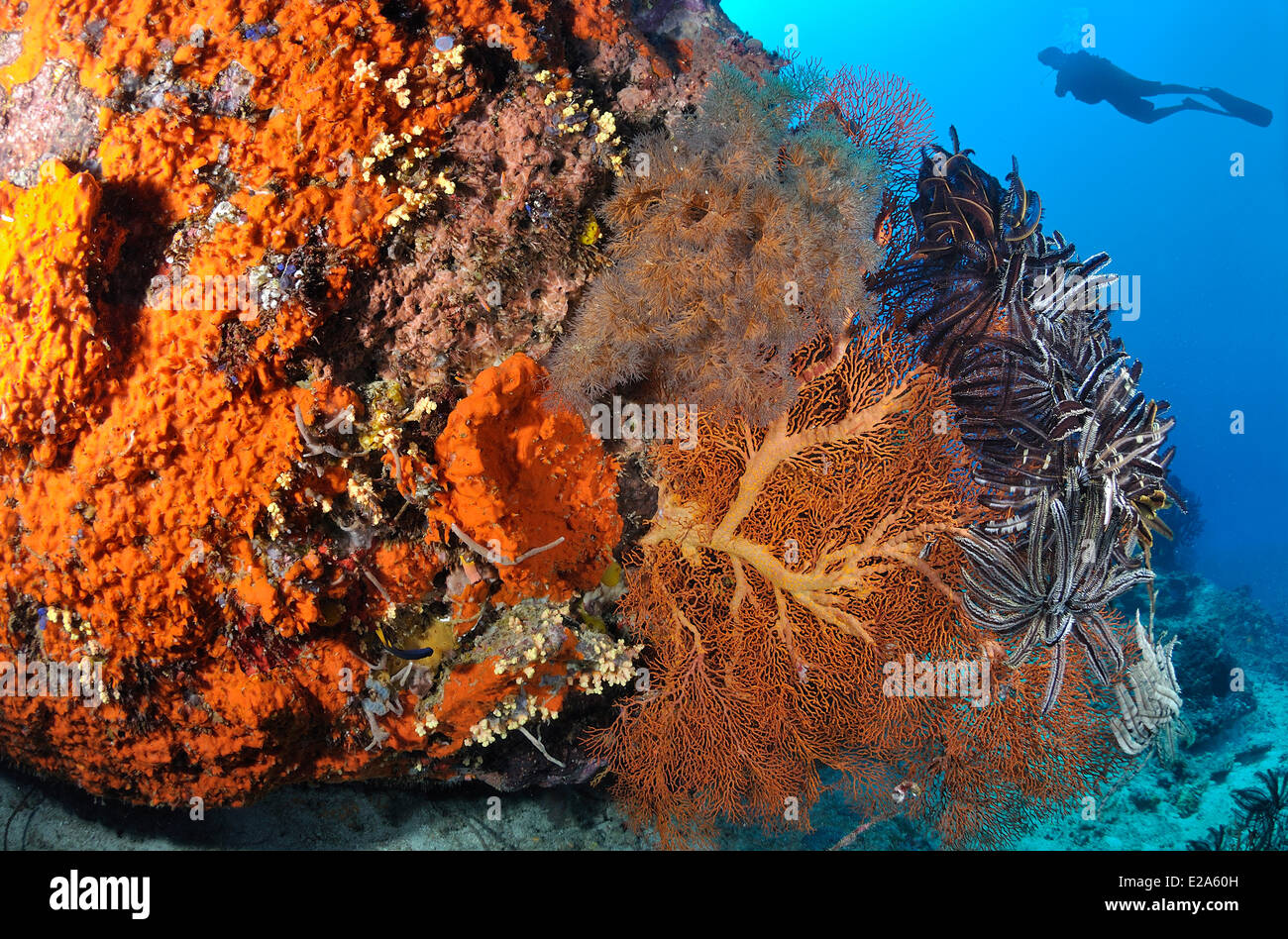 Philippines, Palawan island, a coral reef Stock Photo