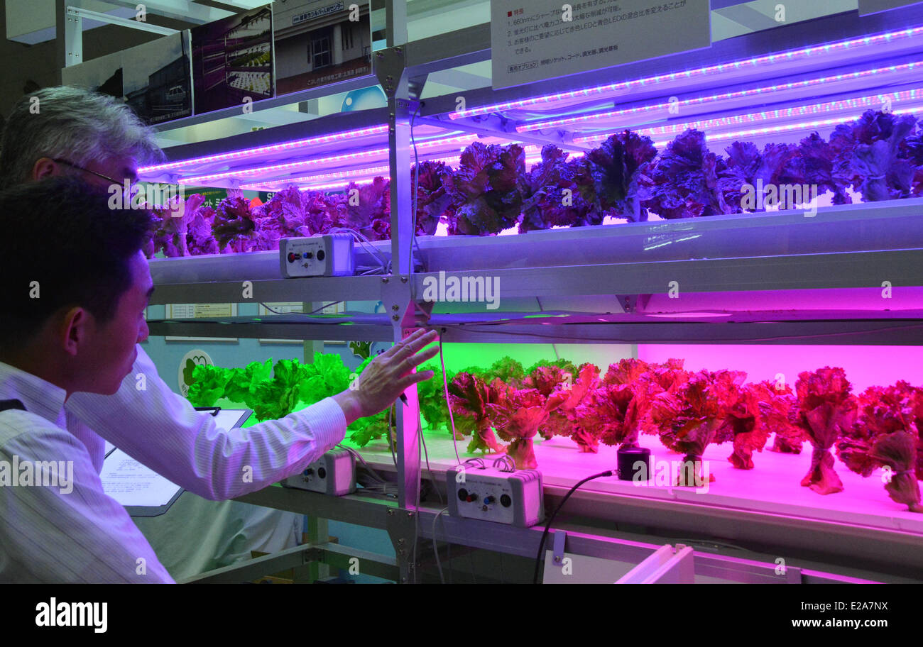 photo How to Grow Vegetables With Grow Lights