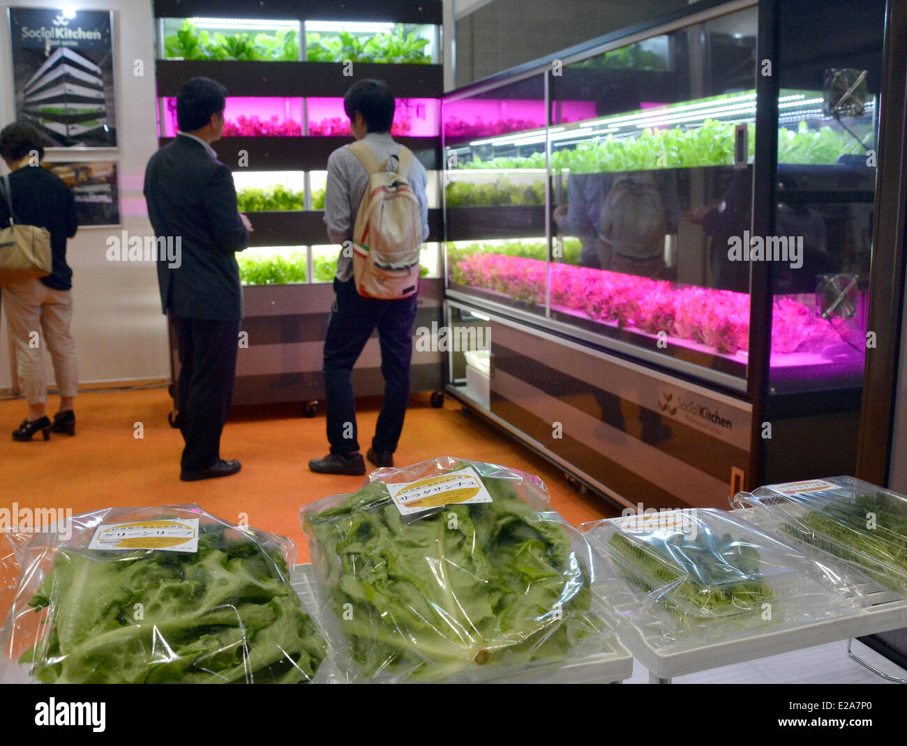 How to Grow Vegetables With Grow Lights