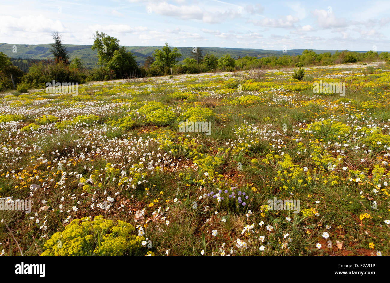 France, Lot, Quercy, Cabrerets, Causse at Spring - Stock Image