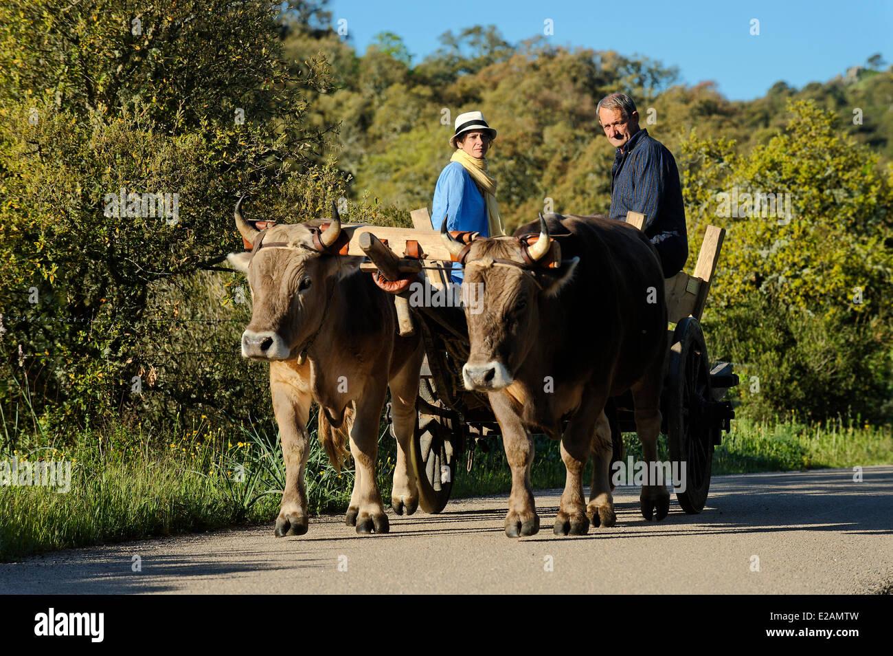 Italy, Sardinia, Olbia Tempio Province, Aggius, horse wagon pulled by a couple of beef roadside - Stock Image