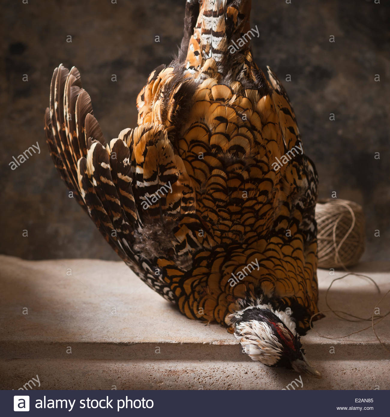 General Gastronomy, Pheasant Hen pheasant Revered and worshiped the Butcher Nivernaise, styling, Valerie Lhomme - Stock Image