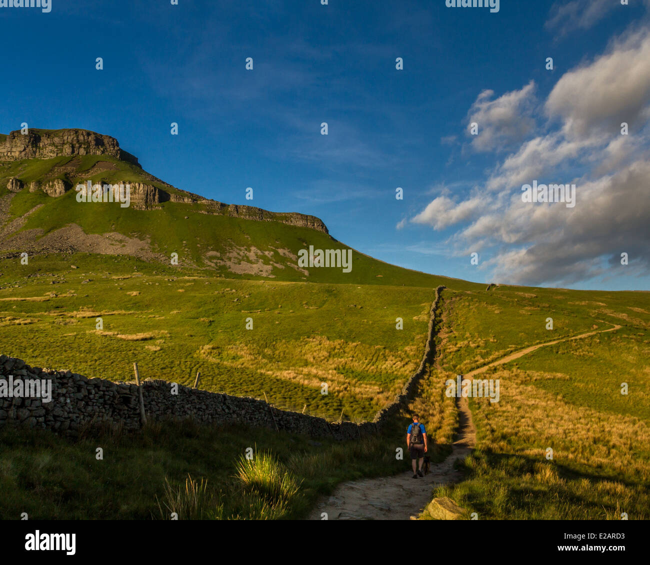 Walker on early morning ascent of Pen-y-Ghent mountain, Yorkshire Dales scene, UK - Stock Image