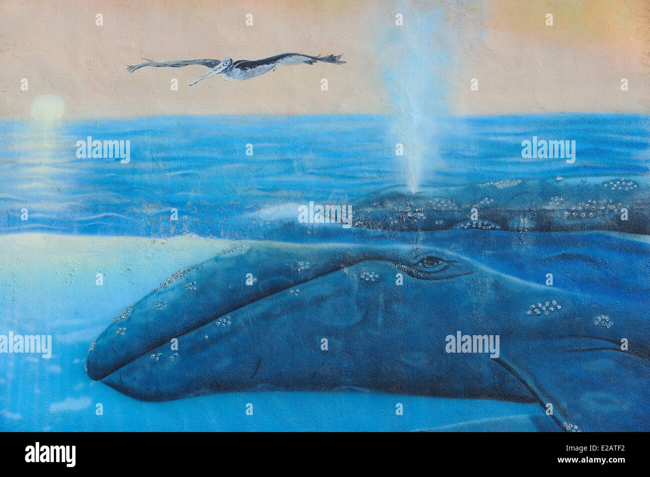 Mexico, Baja California Sur State, La Paz, Mural representing a whale and a brown pelican - Stock Image