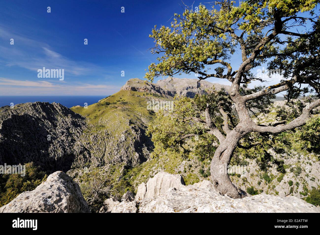 Spain, Balearic Islands, Mallorca, Sa Calobra, landscape of the northwest coast - Stock Image