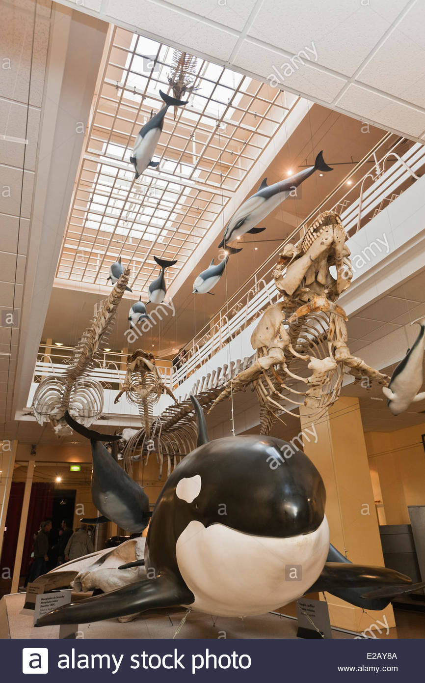 France, Pyrenees Atlantiques, Pays Basque, Biarritz, Sea Museum, Gallery of cetaceans - Stock Image