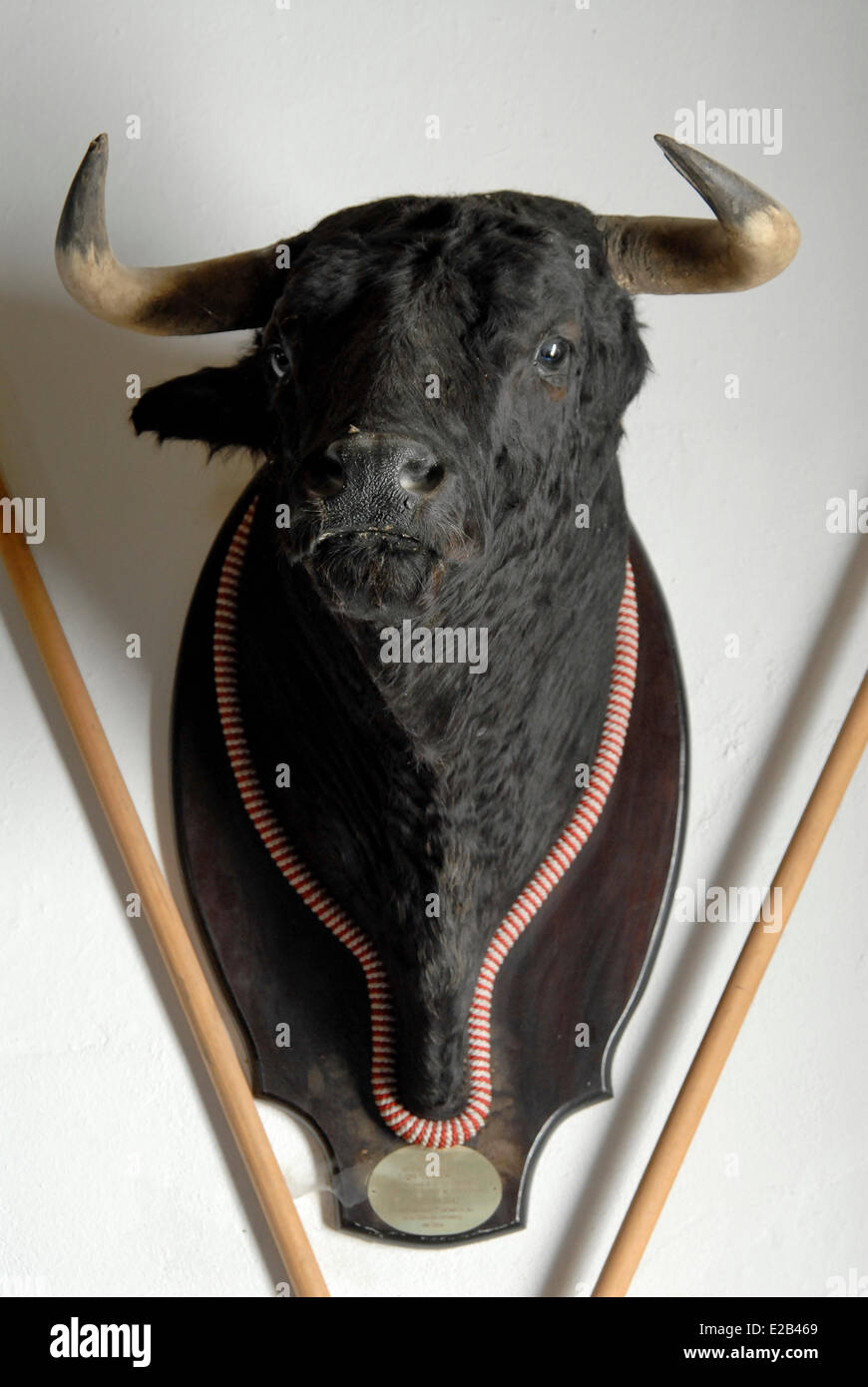 Spain, Andalucia, Almonte, Cortijo los Mimbrales, breeding bull fighting bull head naturalized - Stock Image